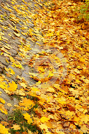 Yellow autumn maple leaf alley