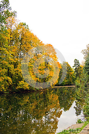 Yellow autumn maple over water