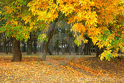 Yellow autumn in the park