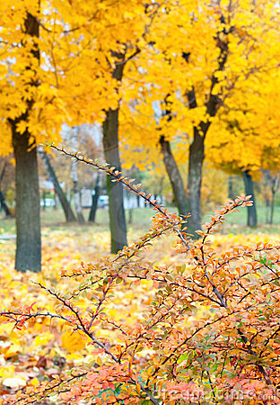 Yellow autumn park