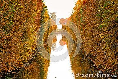 Yellow autumnal park