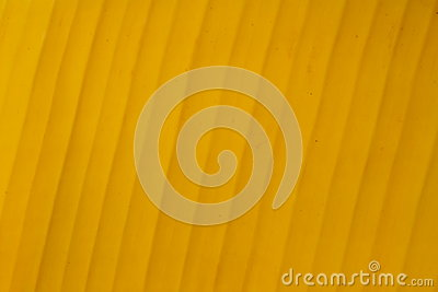 Yellow banana leaf background