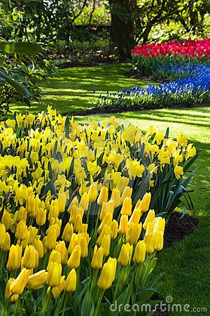 Yellow, blue and red spring flowers
