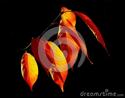 Yellow And Brown Leaved Free Public Domain Cc0 Image