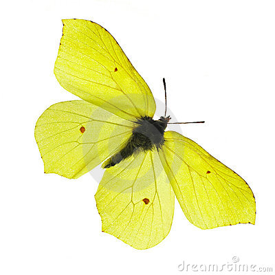 Free Yellow Butterfly Royalty Free Stock Photography - 773537