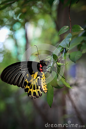Yellow butterfly on green tree leaves