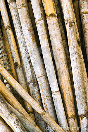 Free Yellow Canes Stock Images - 16511844