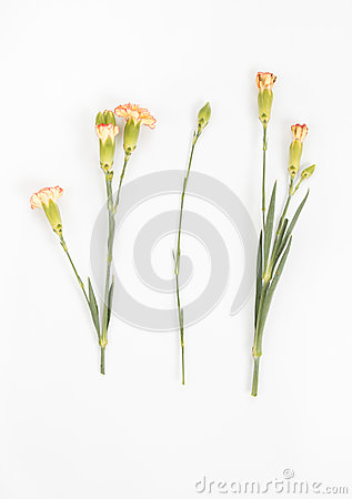 Free Yellow Carnations Isolated Royalty Free Stock Photo - 76133305
