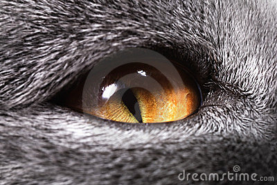 The yellow cat s eye