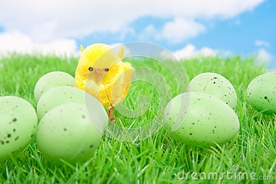 A yellow chick with easter eggs