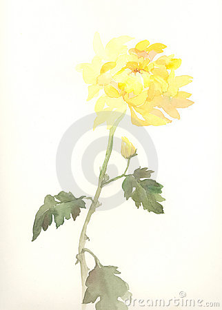 Free Yellow Chrysanthemum Flower Watercolor Drawing Stock Photography - 4083912