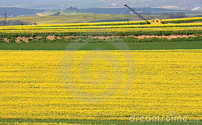 Yellow colza fields and crane in Germany