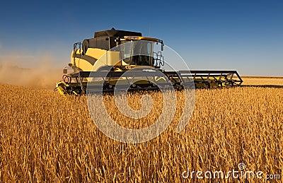 Yellow combine harvester