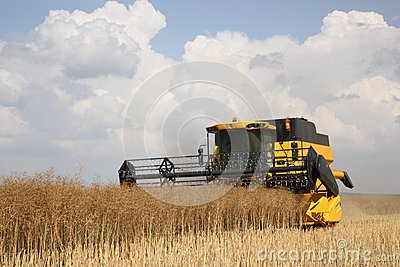 Yellow combine harvester on blue sky