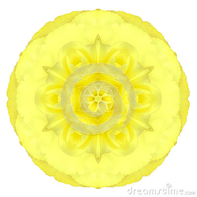 Free Yellow Concentric Carnation Flower Isolated On White. Mandala Design Royalty Free Stock Image - 35480696