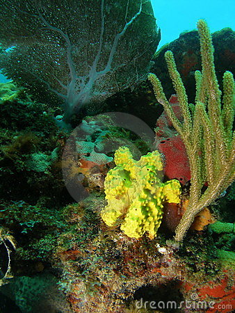 Free Yellow Coral Stock Images - 15608974