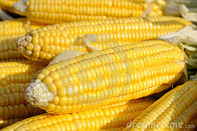 Yellow corn on cob