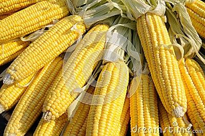 Yellow corn on cob