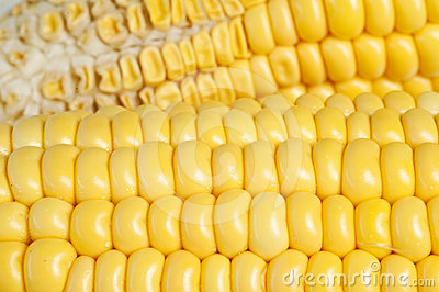 Yellow corn texture