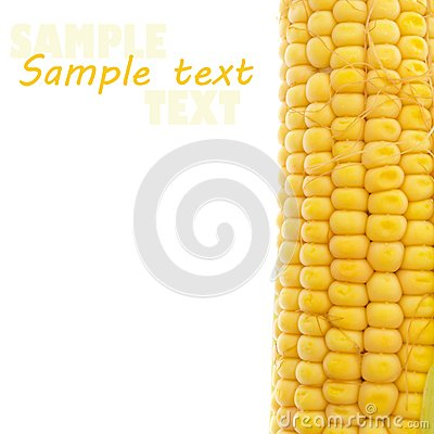 Yellow corn on white