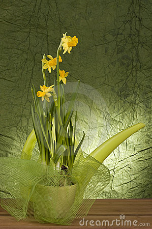 Yellow daffodil in a pot
