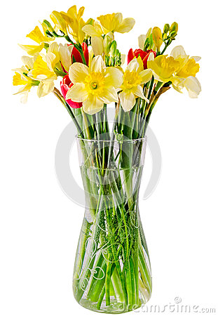 Free Yellow Daffodils And Freesias Flowers, Red Tulips In A Transparent Vase, Close Up, White Background, Isolated Stock Images - 51666864