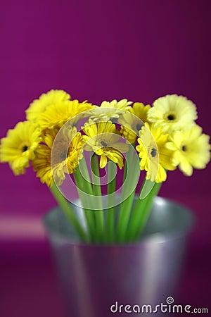 Free Yellow Daises Stock Photography - 4413752