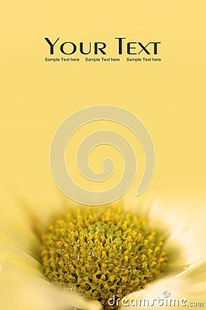 Yellow Daisy flower background