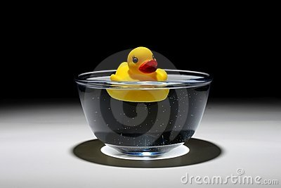 Yellow duck in the water