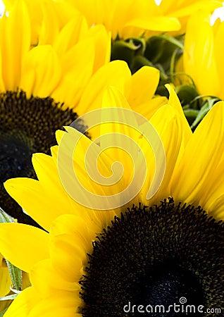Free Yellow Emotions Stock Photo - 2978760