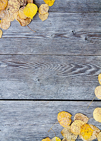Free Yellow Fall Leaves Royalty Free Stock Photos - 21530828
