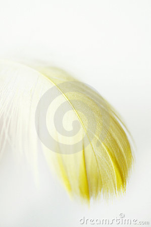 Yellow feather macro
