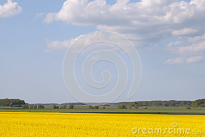 Yellow field.