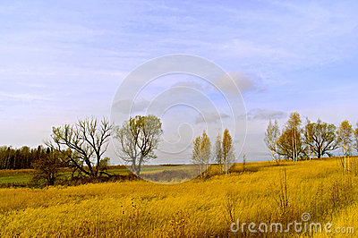 The yellow field and blue sky