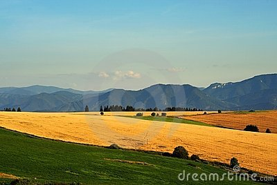 Yellow fields and green meadows