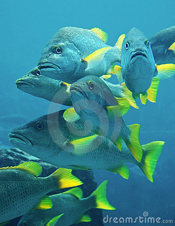 Poll what s your zodiac sign stock photography blog for Blue fin fish