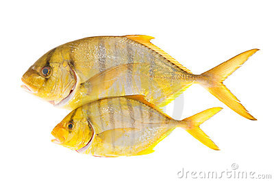 Yellow Fish With Stripes