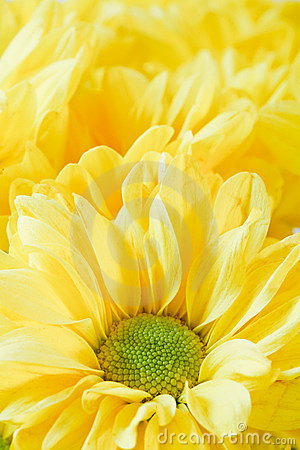 Free Yellow Flower Royalty Free Stock Photography - 12363797