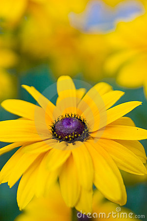Free Yellow Flower Royalty Free Stock Photography - 3779687