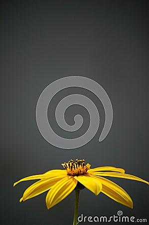 Yellow flower in autumn