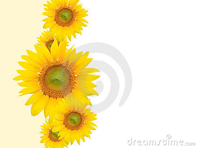 Yellow Flower Background, Summer or Spring Theme