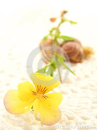 Yellow Flower on Crochet with Snail Shells