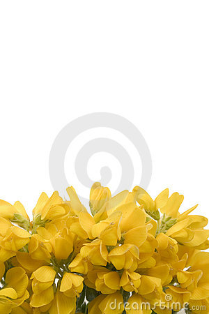 Yellow Flower footer1