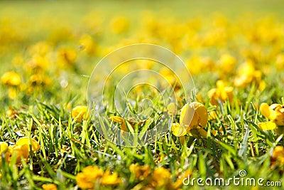 Yellow flower on green grass