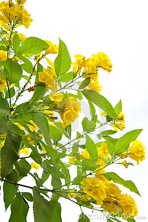 Free Yellow Flowers Stock Images - 12739884