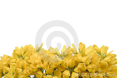 Yellow flowers 2