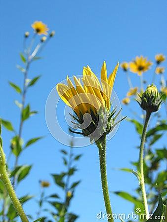 Free Yellow Flowers Stock Photo - 254110