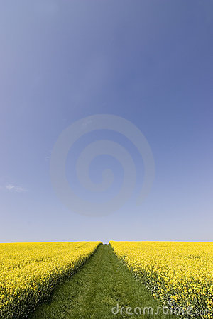 Free Yellow Flowers And Blue Sky Stock Photo - 2254040