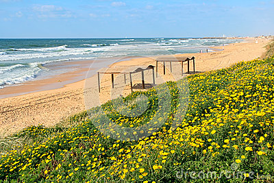 Yellow flowers and the beach on Mediterranean sea.
