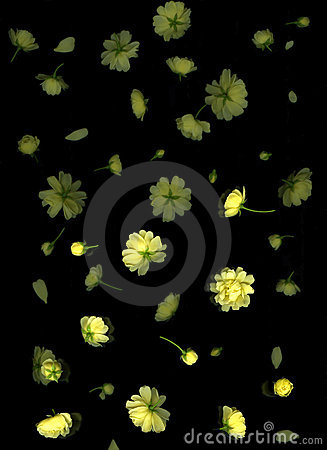 Free Yellow Flowers Falling Stock Photography - 10098702